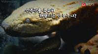'미끈하고 길쭉한 몸매' 뉴욕 동물원 거대 도롱뇽 공개[C브라더_씨원] 이미지