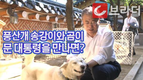 김정은 위원장의 선물 풍산개 '송강'과 '곰이'를 만난 문재인 대통령 [C브라더] 이미지