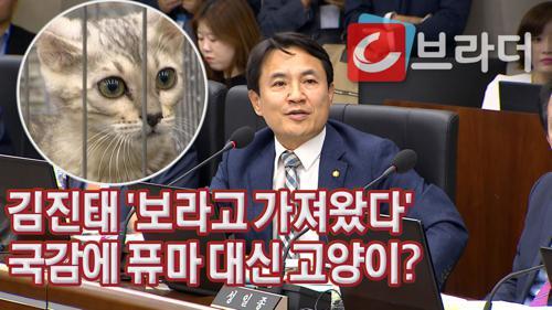 '보라고 가져왔다' 김진태가 국정감사에 벵갈고양이 데려온 이유 [C브라더] 이미지