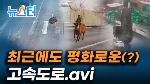 표지판이 부서지고, 동물농장이 펼쳐지고, 고속도로에 드러눕기까지??? 고속도로 위 황당 사고들 [뉴스터]  이미지