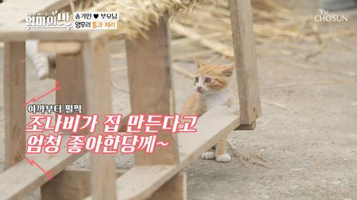 러브 하우스♥ 캣타워 제작에 들뜬 ↙조나비↗
