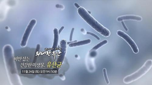비만 잡는 건강한 미생물, 유산균_위대한 유산 6회 예고