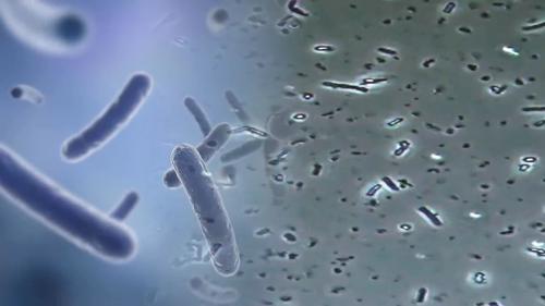 비만 잡는 착한균 장 속 미생물의 놀라운 비밀!_위대한 유산 45회 예고