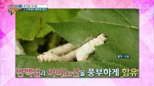 ☆위 건강 사수법☆ 익힌 누에 '홍잠'