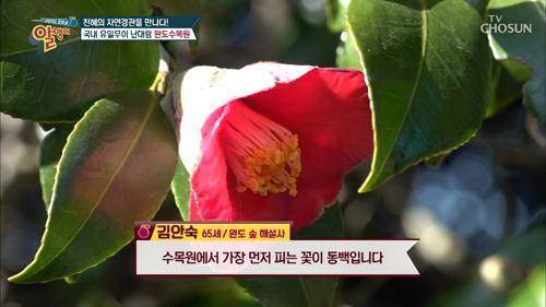 총 4,000여 종의 희귀식물 자생 중 '완도 수목원'