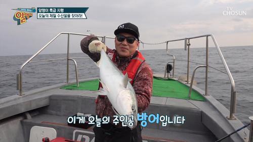 올겨울 제철 생선 〔방어·부시리〕의 구별법✧