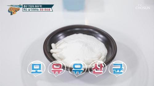모.유.유.산.균 → 비만의 위험을 낮춘다?!