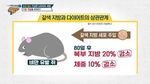 ☆다이어트 비법☆ 지방 색깔을 갈색으로 바꿔라??!