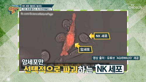 암세포에 맞서는 'NK 세포'란?