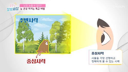 시력의 2종류 '중심시력·주변시력' #광고포함
