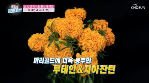 👀시력 건강에 좋은 『마리골드』 #광고포함