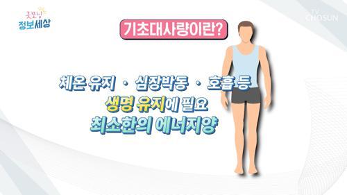 지방 태우는 『기초대사량』 이란? #광고포함