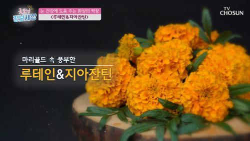 눈 건강 책임지는 '루테인·마리골드' #광고포함