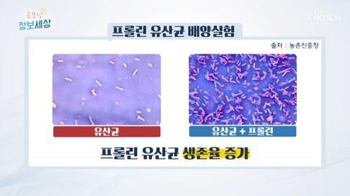 유산균 생존율 높이는 『프롤린』 이란? #광고포함