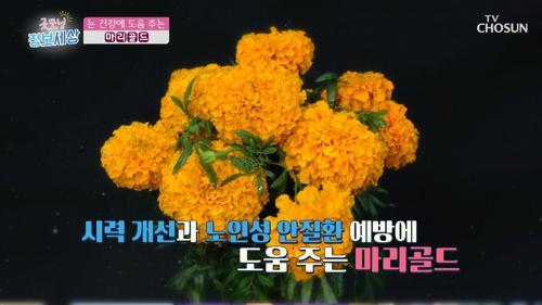 ❀마리골드❀ 눈 건강과 황반변성 예방에 도움 TV CHOSUN 210226 방송