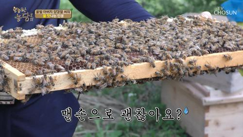 꿀 따러 가세~♬ 벌은 '이것'에 따라 성별 결정?
