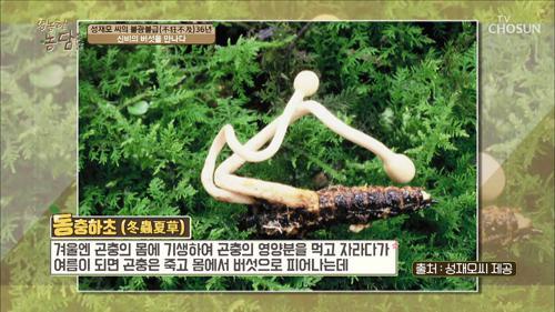 이름은 들어봤남? 신비의 버섯을 만나다 동.충.하.초