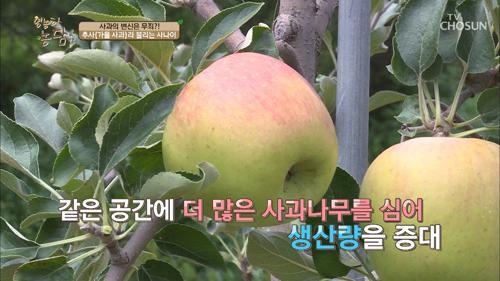 사과의 유럽식 재배 vs 일본식 재배, 그 차이는?