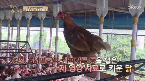 닭이 1,500마리! 하루에 낳는 알이 1,000개?!