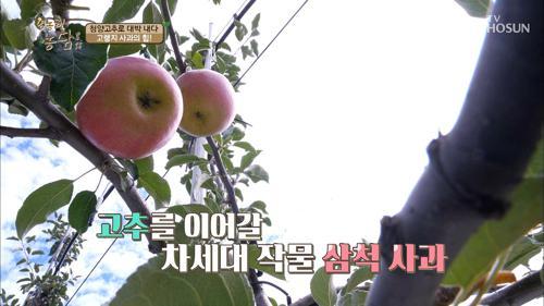 고랭지 사과? 젊으면 장비도 다르다? 장비빨 농사