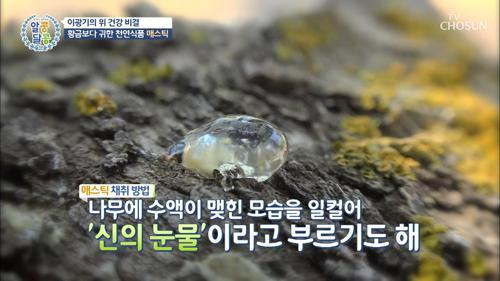 황금보다 귀한 쳔연식품 '신의 눈물' 매스틱