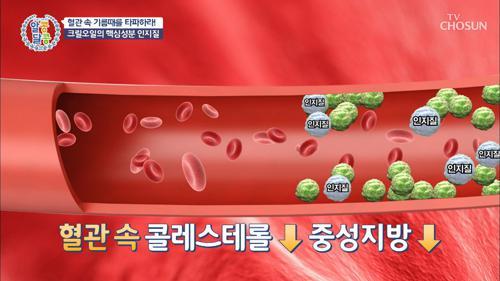 혈관 청소부 크릴오일로 콜레스테롤 중성지방 ⥥