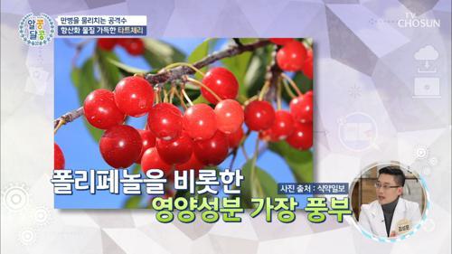 베타카로틴·항산화 성분 가득↗ 「타트체리」 #광고포함