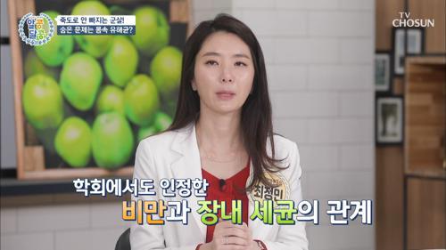 뚱보균이 점령한 장에 도움 주는 「○○○ 유산균」 #광고포함
