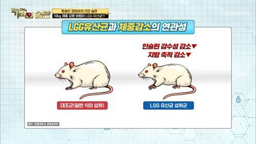 면역력에 도움 되는 ≪LGG 유산균≫ 장점