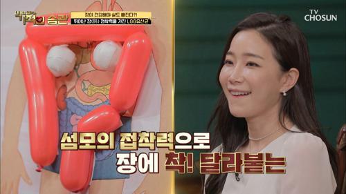 뛰어난 장(腸) 정착력으로 다이어트에 도움 주는 ❛이것❜ TV CHOSUN 210216 방송