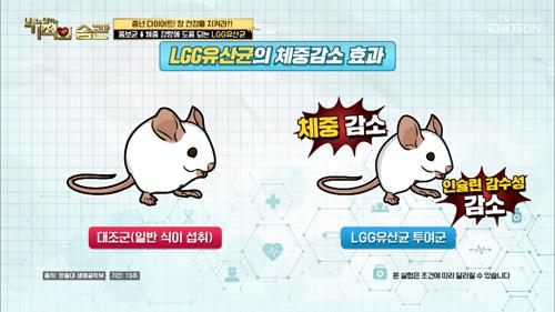 장 건강↑ 체중 감량에 도움 주는 ❛LGG유산균❜ TV CHOSUN 210316 방송