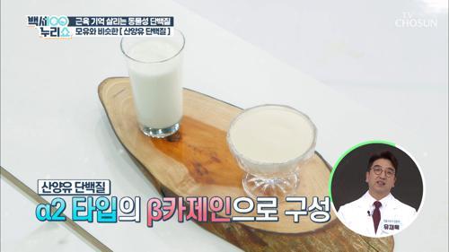 뼈 건강 도우미💪🏻 단백질 함량 높은 『산양유 단백질』 TV CHOSUN 20210519 방송