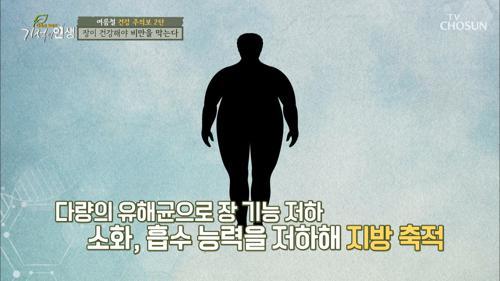 비만을 결정하는 《장 건강》 문제는 장내 유해균?