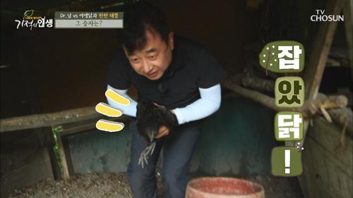 (대박) 오골계 잡았닭!! 의지의 사나이 Dr.남