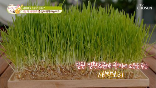 혈관 청소부 혈관건강 관리에 도움 주는 『새싹 보리』 TV CHOSUN 210511 방송