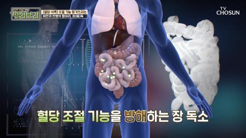 혈당·식욕 조절 기능 망가뜨리는 '장 독소' #광고포함