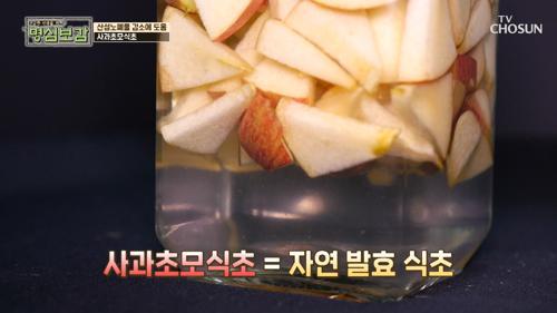 탄수화물 당 흡수 억제하는 '사과초모식초' #광고포함