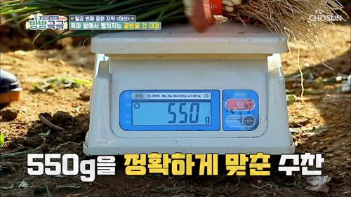 기권 속출ㅋㅋ '쪽파 550g' 맞추기 대회
