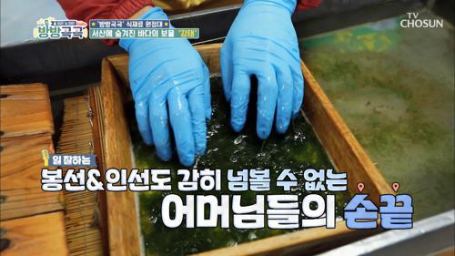 정성만점 수작업 감태 말리기~✧ #광고포함