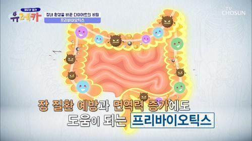 장 튼튼💪 면역력 증가 도움 주는 『프리바이오틱스』 TV CHOSUN 20210214 방송