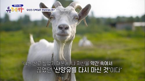 소화도 잘되고 혈당 관리에 도움 준 「산양유 단백질」 TV CHOSUN 20210221 방송