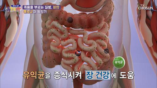 ❛□□□ 유산균❜ 장 건강과 다이어트에 도움 TV CHOSUN 20210417 방송