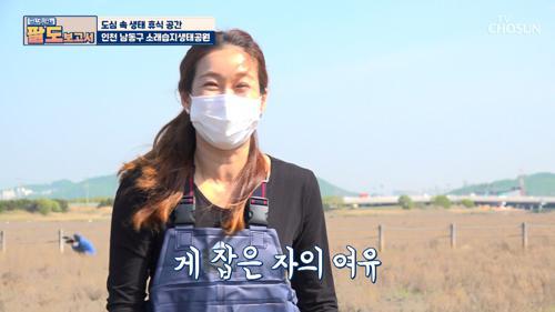 소래습지생태공원의 재밌는 갯벌 체험🦀 TV CHOSUN 20210515 방송