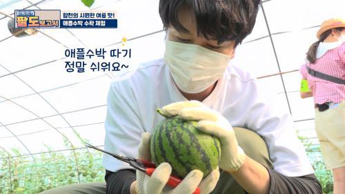 다들 취직 가능..? '애플 수박' 수확 체험🍉 TV CHOSUN 20210605 방송