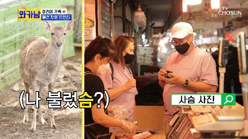 사슴고기???🦌 한국 시장에서 사슴고기를 찾아 삼만리 TV CHOSUN 210706 방송
