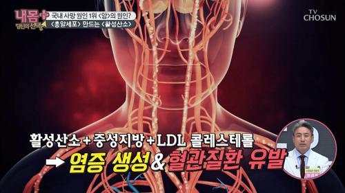 활성산소! 혈관을 늙게 하는 주범