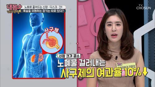 몸 속 장기 노화로 인한 통증? '장기 크기 감소' 때문