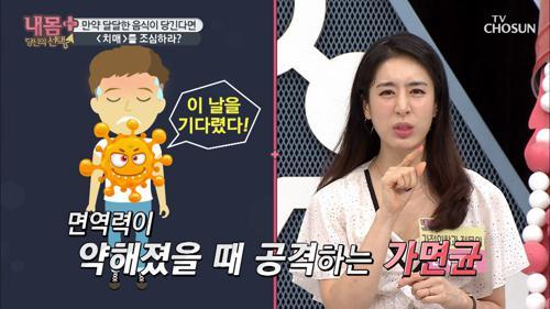 달달한 음식 당기면 '치매 유발' 곰팡이 증가 신호!