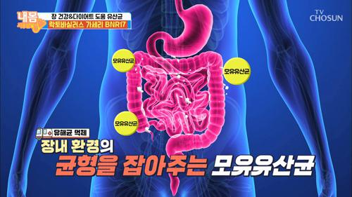 모유 유산균이 특별한 이유!  유해균 억제와 체지방 감소