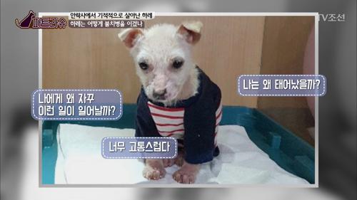 아기 강아지 하레, 죽음에서 기적적으로 살아나다